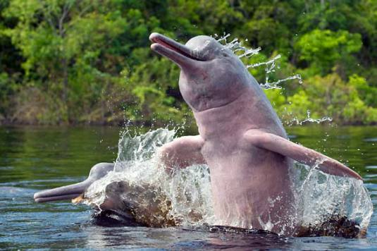Number Of Dolphins In Nepal Improved In Last Two Decades, Estimates Study